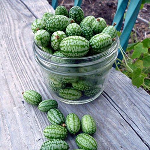 2016 Hot Sale réels Plantes d'extérieur Très facile Graines SEMENTES Seeds Thumb Pastèque Peipujinun 20pcs / sac de légumes des plantes d'intérieur