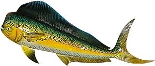 Best mahi fish mount Reviews