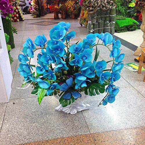 Rare orchidée! Graines Papillon 10pcs Bonsai Balcon Fleur d'orchidée Phalaenopsis ciel bleu bricolage jardin
