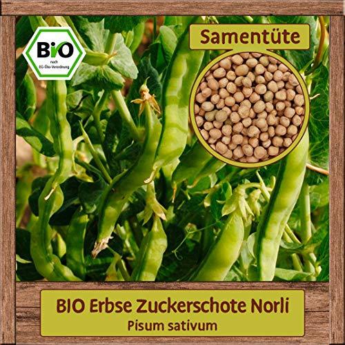 BIO Erbse Samen Sorte Zuckerschote Norli (Pisum sativum) Gemüsesamen Erbse Saatgut