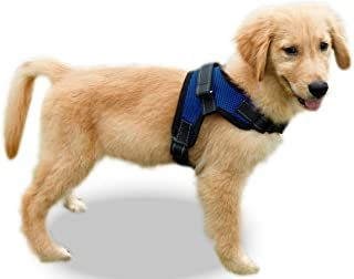 Best leather harness small dog Reviews