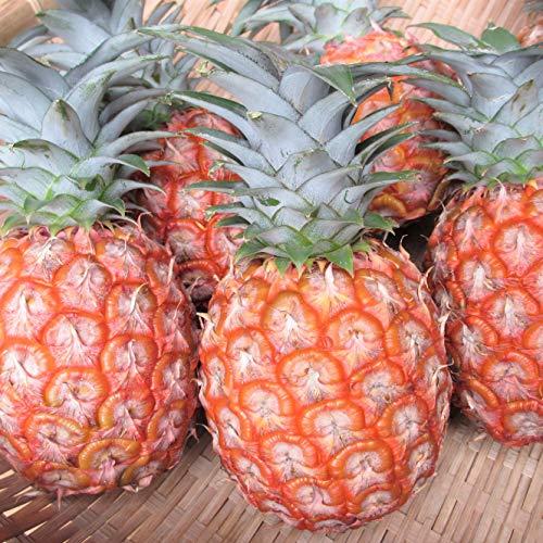 沖縄県産フルーツ ピーチパイン約6.5kg(9玉~12玉)