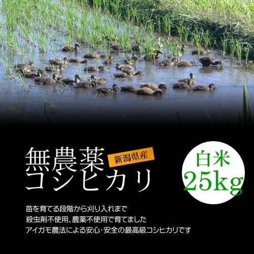 【お取り寄せグルメ】無農薬米コシヒカリ 白米(精米) 25kg(5kg×5袋)/アイガモ農法で育てた安心・安全の新潟米