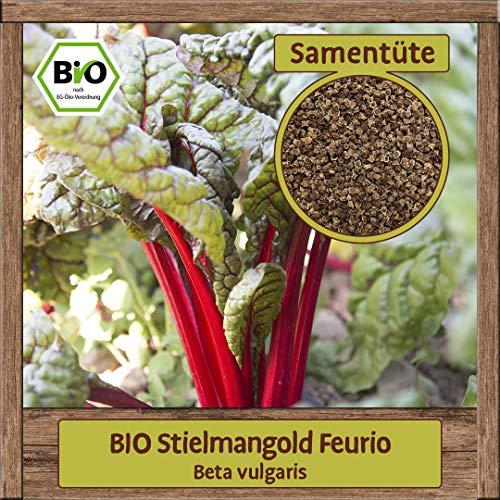 BIO Mangold Samen Sorte Feurio (Beta vulgaris) Blattmangold Gemüsesamen Krautstiel