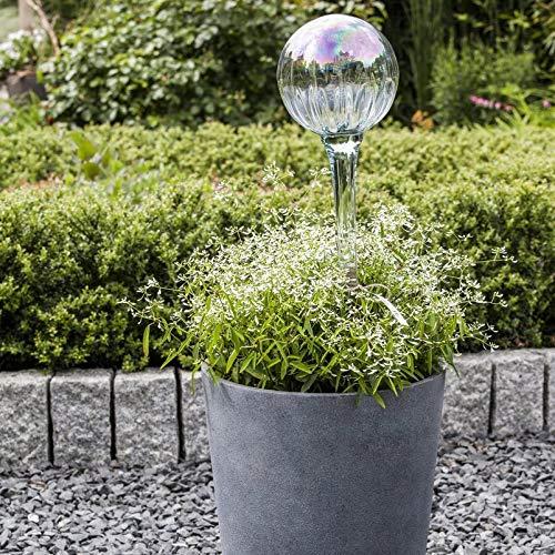 Pflanzen Kölle Schneesturm 'Diamond Frost', 6er-Set, weiß, Topf 12 cm Ø T12