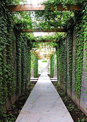 100 pcs vert boston de graines de lierre, Creeper Graines de plantes, graines d'arbres rares pour le jardin et la maison décoration sementes végétales