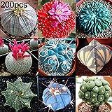 zhouba - semi grassi per piante da giardinaggio, 200 pezzi, mix di semi grassi, cactus, luppolo e bonsai per la casa e il giardino