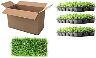Best order st augustine grass Reviews