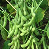 20pcs semi di ortaggi Edamame giardino verde di soia Annual Herb