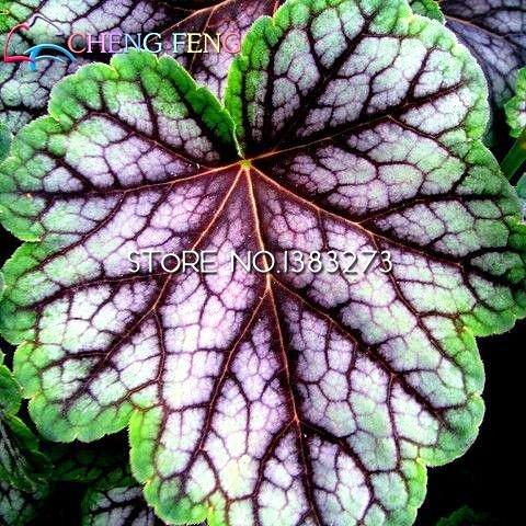 50pcs / lot Heuchera semences Coral Flower Coral Bells Colorful Graines Feuille Bonsai Diy Plante jardin * Belle Pot