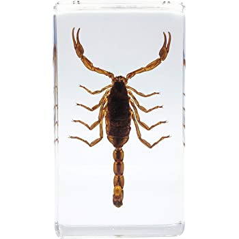 LOOYAR Real Scorpion Insect Resin Paperweight Desk Decoration Taxidermy Animals Biology Anatomy Teaching Aids Educational Tool Toy Specimen for Teaching Book Office Science Education Classroom