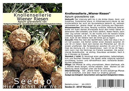 "Seedeo® Knollensellerie ""Wiener Riesen"" (Apium graveolens var.) ca.200 Samen BIO"