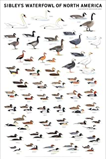 Picture Peddler Laminated Sibley's Waterfowl of North America Swans Geese Ducks Grebes 24x36