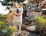 2022カレンダー 柴犬げんきな おはなしカレンダー ([カレンダー])