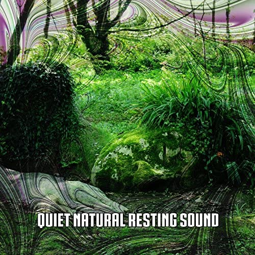 Nature Sounds Nature Music, Sleep Sounds of Nature & Rest & Relax Nature Sounds Artists