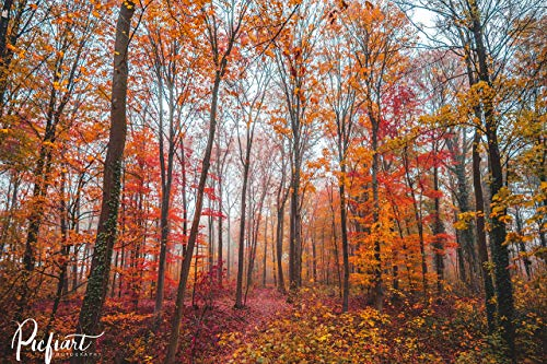"""Wandbild """"Der Wald Ruft"""" von Picfiart, Motiv: Herbstlicher Blick in den Kottenforst in Swisttal – Fotos/Bilder, Poster"""