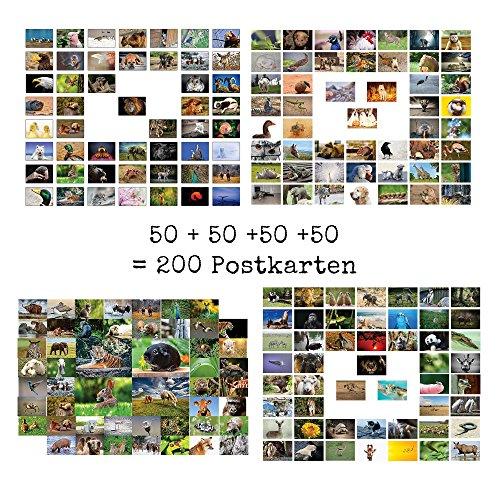Tiere Postkarten - 200 verschiedene Tierpostkarten-set ideal für Sammler und Postcrossing