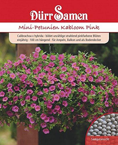 Mini-Petunien Kabloom Pink von Dürr-Samen