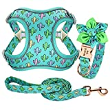 Forestpaw Multi-Colored Dog Harness and Leash Set,Step in Reflective Vest Harness, Personalized Dog Collar and Harness for Small,Medium,Large,French Bulldog,Teddy,Labrador,Samoyed,CactusGreen,L