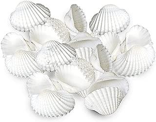 Best saltwater aquarium scallops Reviews