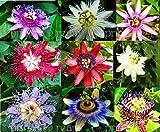 Elitely 5 Stcke Passionsblume (Passiflora Incarnata), Samen Exotische Passionsfrucht Passiflora Edulis Fr Hausgarten: Mix