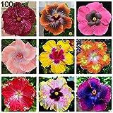 XdiseD9Xsmao 100 Stücke Mischfarbe Hibiskus Blumensamen Hohe Keimrate Pflanzensamen Topfpflanze Garten Bonsai Balkon Decor 100 Stück Hibiskus Samen #