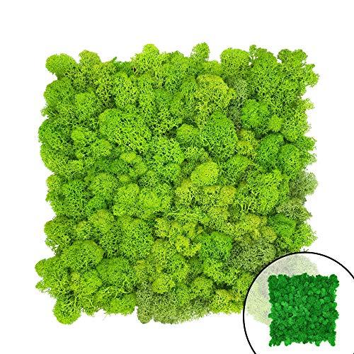 GJS Moosbild – Moosmatte/Moosplatte (30x30cm) aus echtem Islandmoos für Mooswand/Pflanzenbild/Deko-Paneele zum Basteln/selber Machen (1 Stück (ca. 0,1m²), hellgrün)