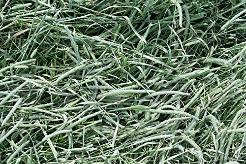 Standlee Hay Company Premium Timothy Grass Hand-Selected Forage, 25 lb Box 7