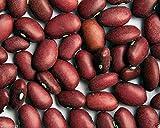 Fagioli, 200 semi di Hidatsa rossi organici, fagioli rossi indiani, Heirloom (Half-runner)