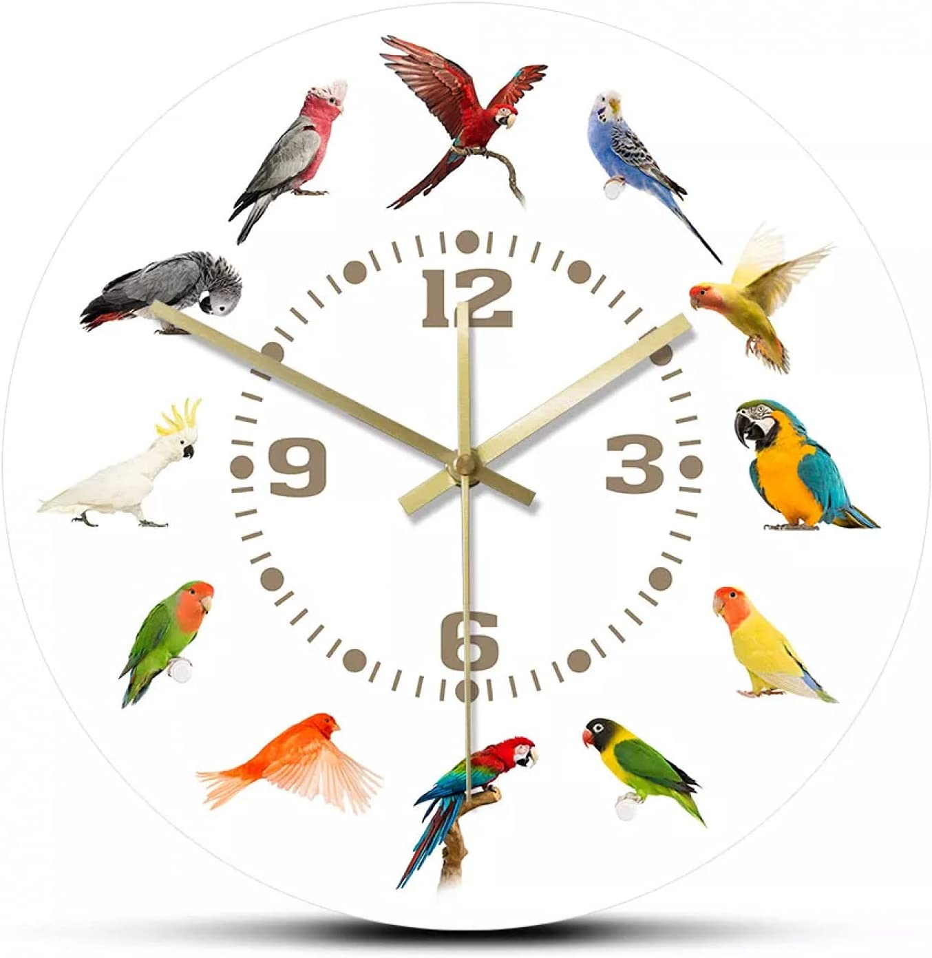 wszhh Colección de Razas de pájaros Reloj de Pared Moderno Reloj de Pared sin tictac Loro Pájaro Especies de Mascotas Arte de Pared exótico Amantes de los pájaros Decoración del hogar