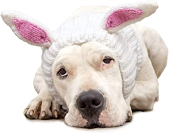 Best bunny ears for dogs