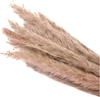 QIUHUAXIANG 15 Pcs Dried Small Pampas Grass Phragmites Communis Decoration for Home Store Wedding TP899,Beige