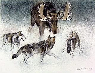 Robert Bateman - Wolf Pack And Bull Moose Predator Portfolio Hand Colored