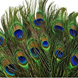 SHUO 10-12'(25-30cm) 50pcs Natural Peacock Feather Eyes Screen Green DIY Craft Holiday Wedding Decorations