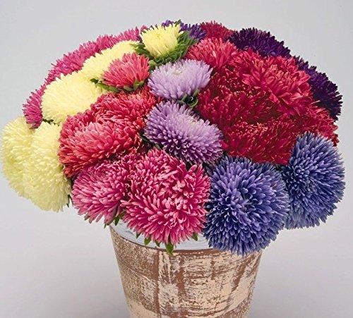25 sortes de semences Chrysanthemum & Daisy Flower 100% réel de Nice Free Pack choisir bricolage jardin Bordure de jardin Balcon