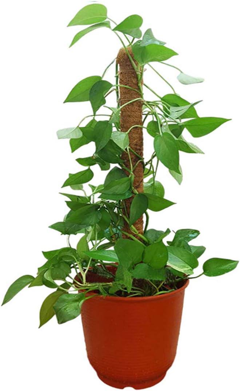 t/ótem bast/ón de musgo para enredaderas HH-LIFE t/ótem soporte de plantas y escalada. 2 varillas de t/ótem de coco de 43 cm con 10 lazos giratorios musgo coco soporte para plantas