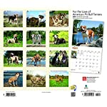 For the Love of American Pit Bull Terriers 2020 14 x 12 Inch Monthly Deluxe Wall Calendar with Foil Stamped Cover, Animal Dog Breeds 4