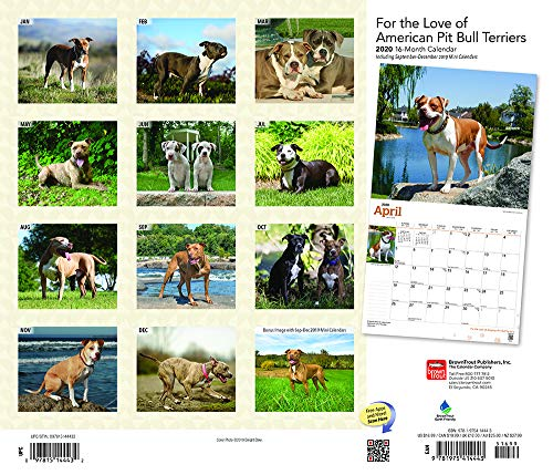 For the Love of American Pit Bull Terriers 2020 14 x 12 Inch Monthly Deluxe Wall Calendar with Foil Stamped Cover, Animal Dog Breeds 2