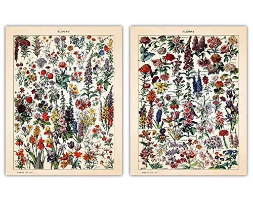Vintage Flowers Wall Art Prints - Set of Two (11x14) Unframed Pictures For Home, Office, Dorm & Bedroom Decor - Great Gift Idea Under $20