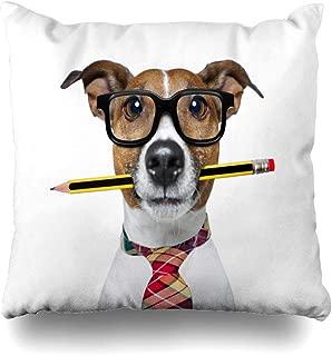 Juego de 4 fundas de almohada cuadradas de 20 x 20 pulgadas para profesor, profesor, gato, Russell, perro, lápiz, boca, gafas, secretario, funda de almohada con cierre, decoración del hogar