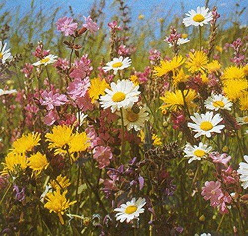 Blumen- und Kräuterwiese Samen