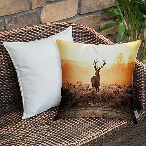 Funda de Cojin,Funda de Almohada Cuadrada para Asiento,Caza, ciervo rojo en el sol de la manana Paisaje de naturaleza salvajFundas de Almohada para Sofa Decorativas Dormitorio Coche Pulgada 45 x 45 cm