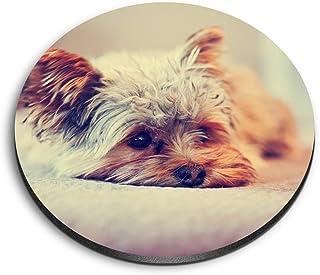 Destination 15621 Aimants ronds en MDF pour bureau, armoire et tableau blanc Motif Yorkshire Terrier Chiot
