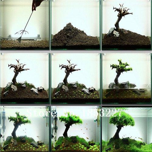 100 Samen / Beutel Aquarium Gras-Samen Wasser Grasses Zufall Wasserpflanze Grassamen Indoor Beautifying Pflanzensamen