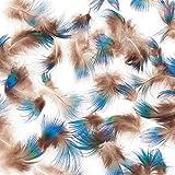 【羽】ブルーネック 1g [021-Fe-Blue-N] 孔雀 フェザーパーツ 羽根 羽毛 材料 素材 手芸 アクセサリー 花材 フラワーアレンジメント ハロウィン ドリームキャッチャー 仮装 ダンス 衣装 コスプレ