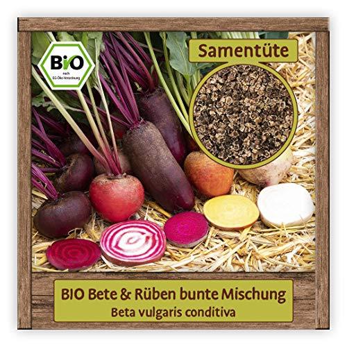 BIO Rüben & Beeten Samen Mischung Gemüsesamen bunte Rüben & rote Bete