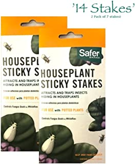 Collective Safer Brand 5025 Houseplant Sticky Stakes Insect Trap, 14 Traps (2 Packs of 7) and Bonus Moth Trap Made by Q-Traps Also Included