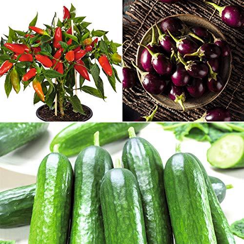 tomgarten Volmary Saatgut Gemüsesamen Chili Aubergine Mini-Schlangengurke Set Garten Pflanzen Balkon-Gemüse