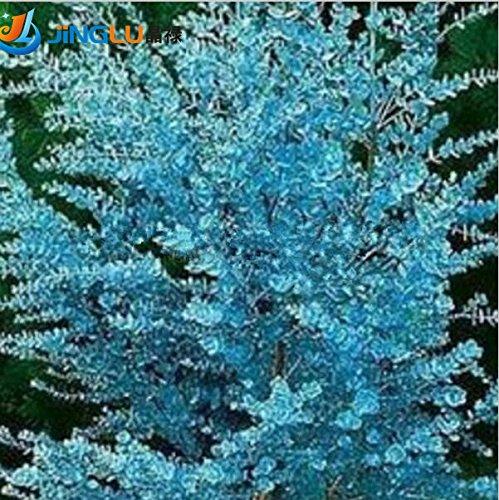 200pcs graines de plantes aromatiques blumea aromatiques, graines de armoise odorantes, graines comestibles de plantes médicinales