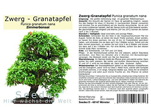 Seedeo® Zwerg-Granatapfel (Punica granatum Nana) Bonsai 30 Samen